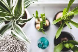 tropical office plants. brilliant tropical best tropical indoor plants for your home for office i
