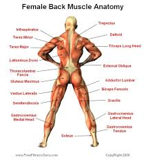 66 Explicit Interactive Muscle Chart