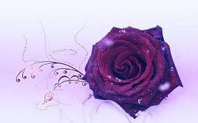 purple rose wallpaper download. Contemporary Rose Wallpapers For U003e Purple Rose Wallpaper Download In A
