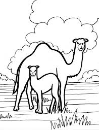 Small Picture Camel coloring page Animals Town animals color sheet Camel