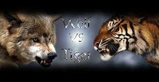 Certainly, tiger is more powerful, even to fight 3 wolves vs. Wolf Vs Tiger By Ekoki On Deviantart