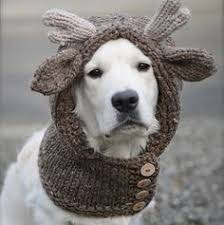 Crochet Dog Hat Pattern Delectable Crochet Dog Hat Pattern Ideas Best Collection I Love To Be Warm