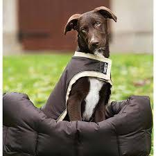 horseware rambo dog rug waterproof brown cream