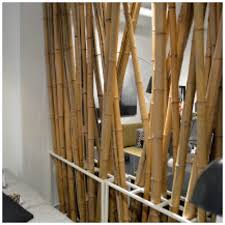 walking past the rather extensive (and cheap) bamboo collection at