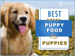 7 Best Puppy Foods Our 2019 Puppy Feeding Guide