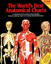 World S Best Anatomical Charts The Worlds Best Anatomical Charts By Various