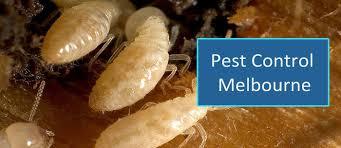 Image result for pest control Service melbourne