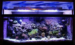 diy led reef tank light image 10