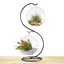sungrow 2 glass plant terrarium globes with metal stand 13 tall black s