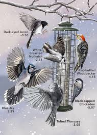 When 136 Bird Species Show Up At A Feeder Which One Wins