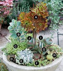 118 Best Flowerscontainers Images On Pinterest  Flowers Proven Bhg Container Garden Plans