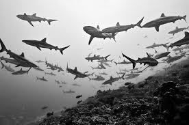 ocean tumblr photography. My Tumblr #ocean #water #depth #school #fish #sharks #sea Ocean Photography B