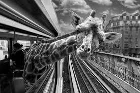 """Résultat de recherche d'images pour """"regard animaux"""""""