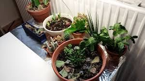 lighting for houseplants. fine houseplants if you have any more questions about my artificial light experimenting or  want to share your own experiences with growing houseplants under articifial  for lighting houseplants