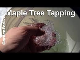 Build A Homemade Maple Syrup Evaporator  DoItYourself  Maple Backyard Maple Syrup