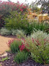 Small Picture 1296 best Australian Native Gardens images on Pinterest Native