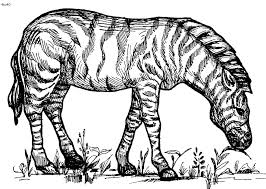 Small Picture Animal Coloring Book Pages Good Best Ideas About Adult Coloring