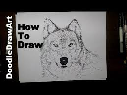 gray wolf face drawing. Brilliant Drawing Drawing How To Draw A Wolf Face Step By  Arctic Sketched Or Grey  Painted Throughout Gray Drawing V