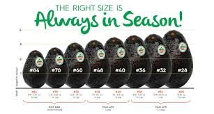 Avocados The Right Size Is Always In Season Baldorfood