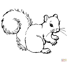 Small Picture Grey Squirrel coloring page Free Printable Coloring Pages