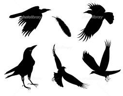 カラス 動物 鳥 イラスト素材 1681851 フォトライブラリー
