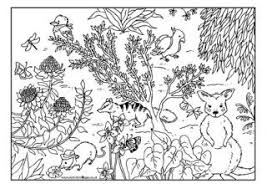 Small Picture Australian Animal Colouring Pages
