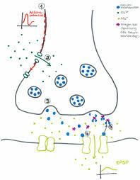 chemische synapse