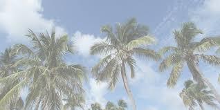 palmeras headers Tumblr