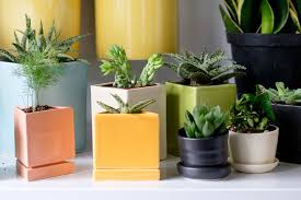 office cubicle plants. The Botanical Cubicle Best Office Plants For Beginners All Hands E