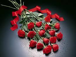 أجمل الزهور images?q=tbn:ANd9GcQ