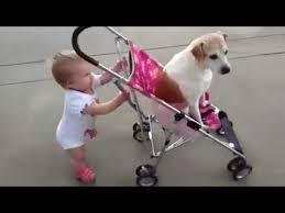 cute baby dog.  Cute Babies And Dogs Take Each Other For A Walk  Funny Cute Compilation For Cute Baby Dog