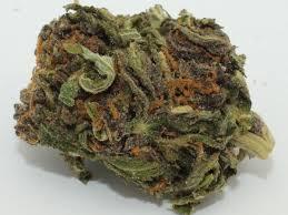 Buy Jager Marijuana Strain