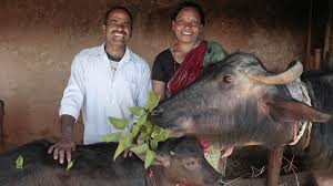 heifer international s mission is to end hunger and poverty while caring for the earth for more than 70 years they have provided livestock and