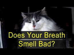 cats breath stinks. Brilliant Cats How To Tell If Your Breath Smells Bad  Featuring Tim The Cat With Cats Stinks