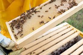 Αποτέλεσμα εικόνας για bee haive