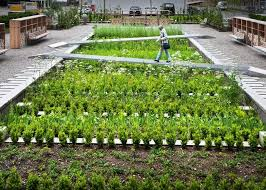 Small Picture Medicinal Herb Garden Design With Vegetable Garden Design Have