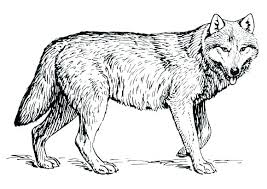 Cool Coloring Pages Of Wolves Free Collection Of Cool Wolf Coloring