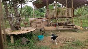 adorable goat house plans free free goat house plans pygmy goat shed plans shed barn plans