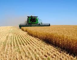 Сельское хозяйство признано крупнейшим загрязнителем воздуха Сельское хозяйство признано крупнейшим загрязнителем воздуха