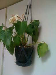 office cubicle plants. Plant Holder To Keep My Desk Clear At Work :) (It Hangs From Cubical Wall!) Office Cubicle Plants B