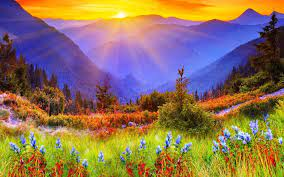 nature, Landscape, Flowers Wallpapers ...