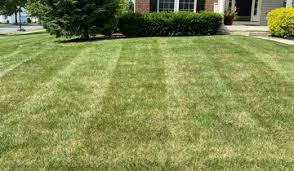 Tracy, CA Lawn Care Service | Lawn Mowing from $19 | Rated Best 2021