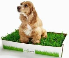 dogs bathroom grass. a stylish and eco-friendly alternative to unsightly pee pads, dogs their owners are opting for this convenient real grass delivery bathroom