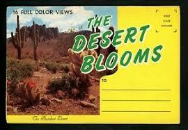 Details About Postcard Folder Desert Blooms Plants Cactus Cacti Flowers Sunset Chrome