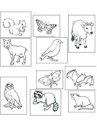 nocturnal animals coloring pages. Interesting Coloring Nocturnal Animals Coloring Pages Worksheets Ks1 Animal Sheets Colouring  Intended Nocturnal Animals Coloring Pages A