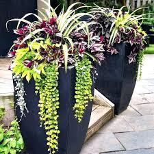 flower pot ideas uk fresh patio planter ideas patio pot plant ideas uk