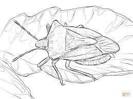 Small Picture Stink Bug coloring page Free Printable Coloring Pages