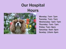 garden grove dog and cat hospital garden grove dog and cat hospital garden grove boulevard garden grove ca