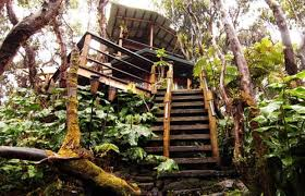 Image result for airbnb treehouses