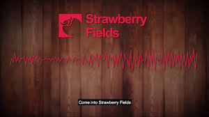 weed dispensary pueblo colorado strawberry fields cans